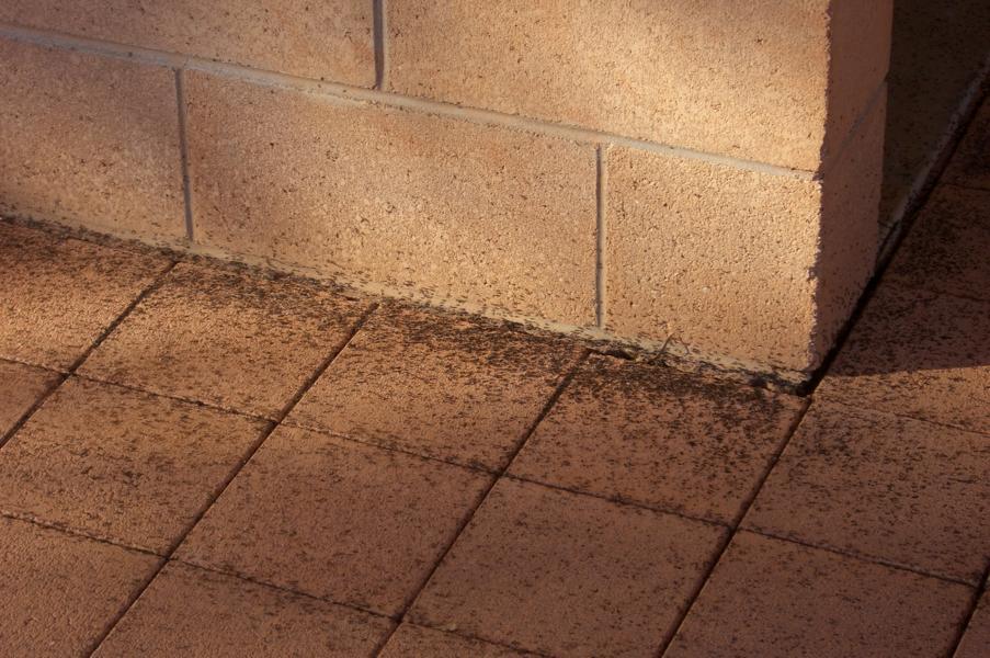 thomas ist mutig und macht fotos von ameisen sind nicht. Black Bedroom Furniture Sets. Home Design Ideas